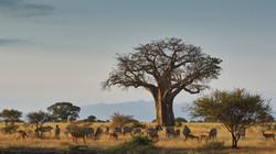 tarangire-national-park-1505190931-1000X