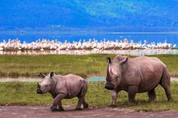 6-day-Tanania-Safari