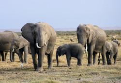 elephants-2999674_1920