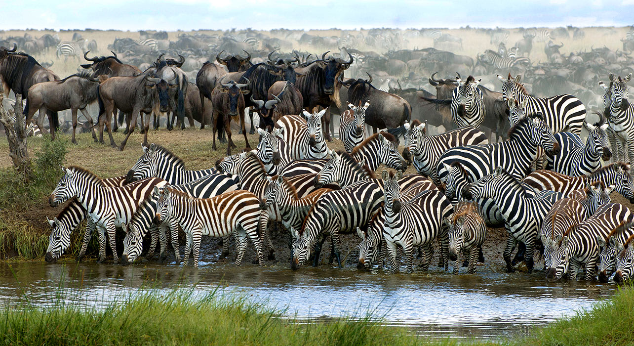 7-slide-africa-migration-zebra-waterhole