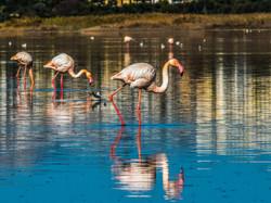 flamingo-3051798_1920