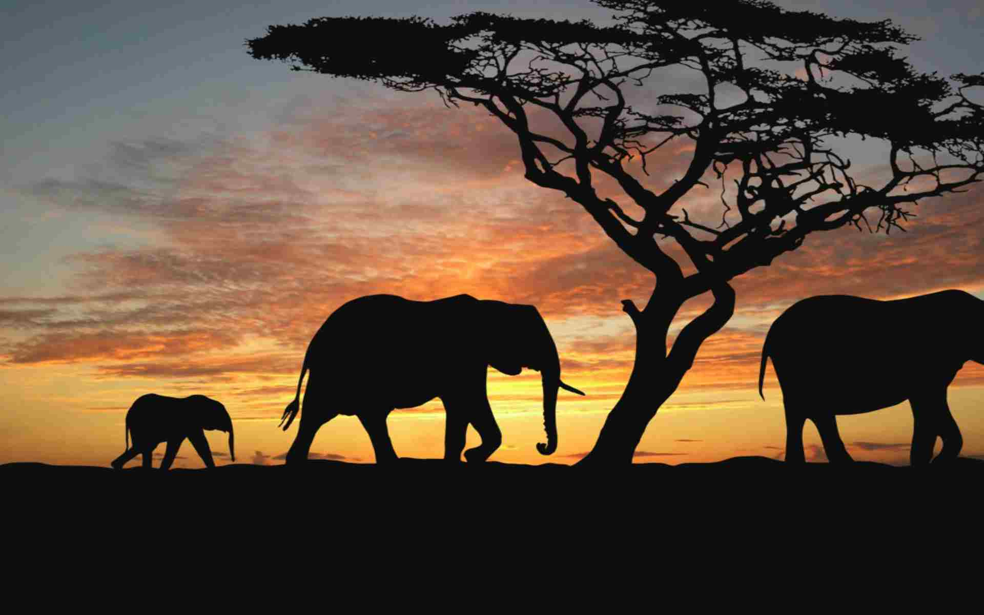 tanzania-camping-safari-3