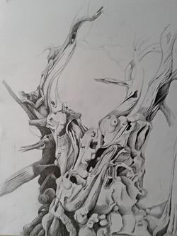 Holzfurie