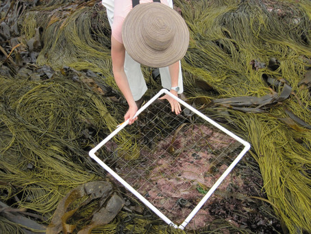 New paper out: Macroalgal species concept