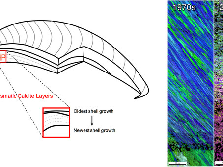 New paper out: California mussel shells lose mineral structure with ocean acidification