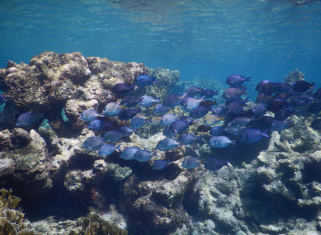 New paper out: Bright spots could be key to securing the future of declining coral reefs