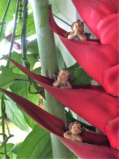 Christmas_heliconia from our garden.jpg