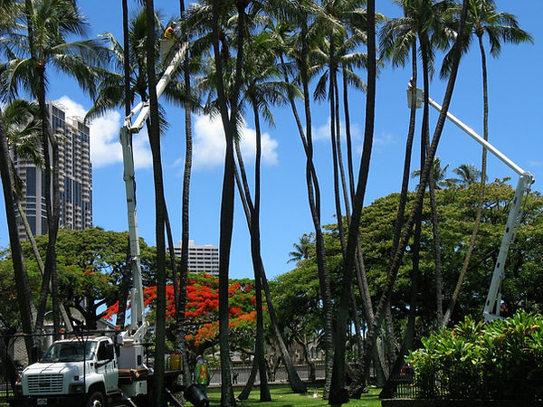 Imua Landscaping Residential