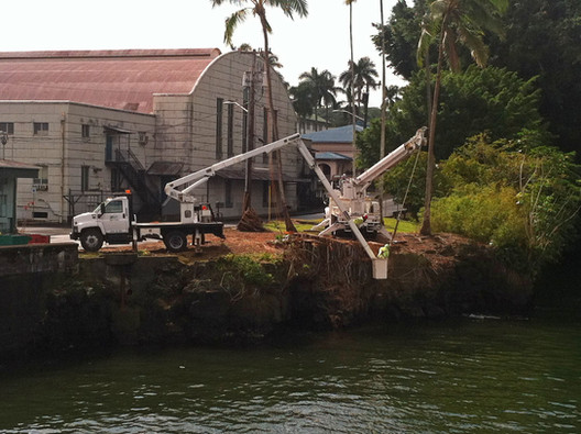 Big Island Banyan Removal 2.jpg