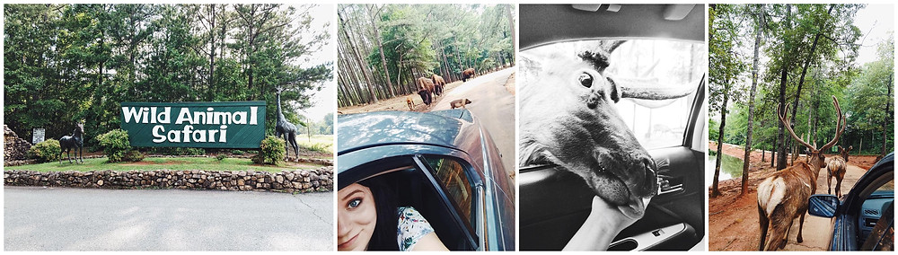 Wild Animal Safari Georgia