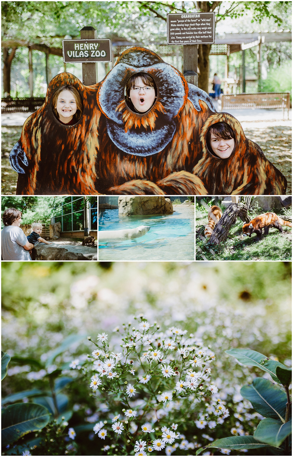 Henry Vilas Zoo, Travel Photography
