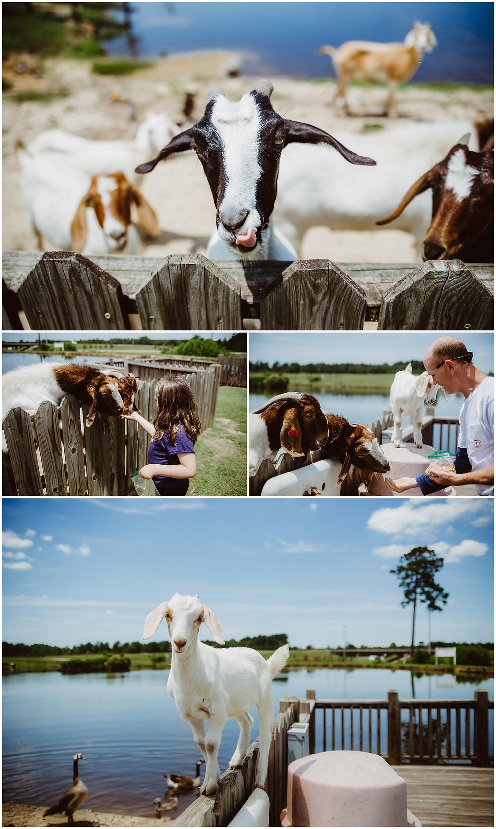 Georgia Travel Photography, Mosleys Famous Animal Farm Exit