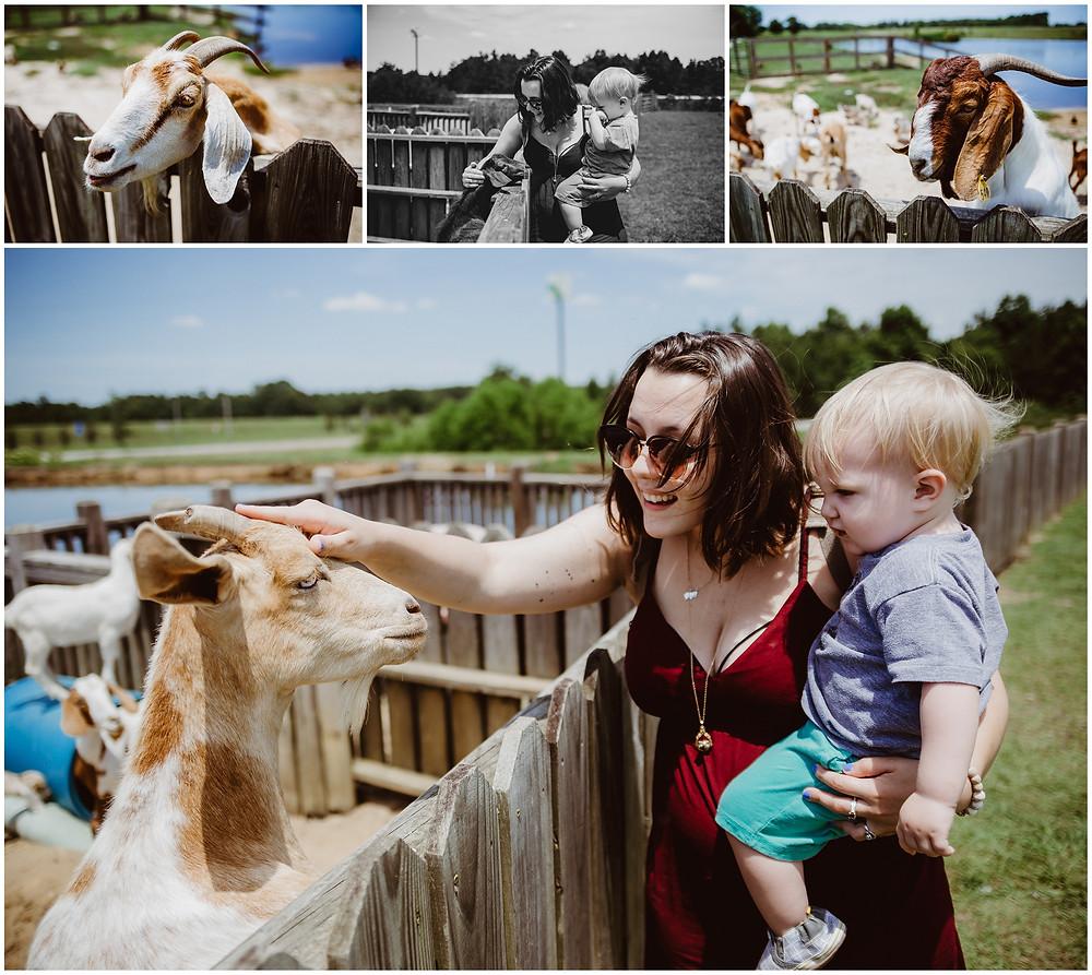 Georgia Travel Photography, Mosley's Famous Animal Farm Exit