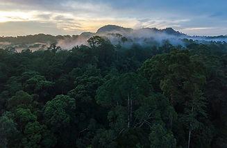 rainforest-trust-blog.jpg
