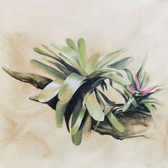 Epiphytes.jpg