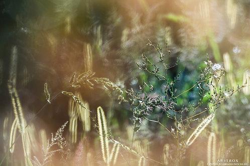 Herbal Lustre