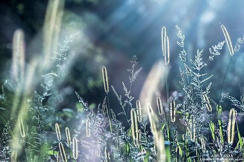 Herbal Lustre 2