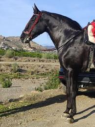 SPANISH_HORSE_SADDLE.jpg