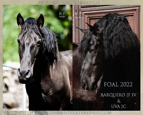 ANNONCE_FOAL_2022_UVA_BARQ.jpg