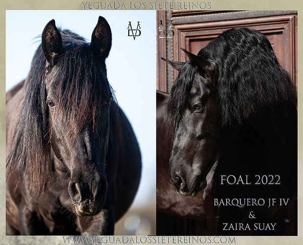 ANNONCE_FOAL_2022_ZAIRA_BARQ.jpg