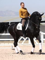 Black_Andalusian_stallion_at_stud.jpg