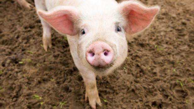 Pork Share Deposit
