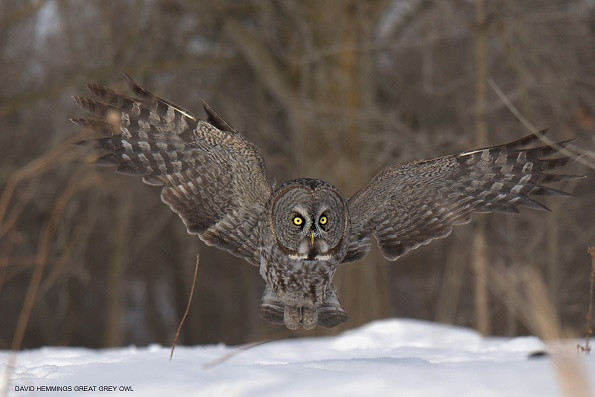 Happy New Year! Owls Are Wonderful!
