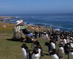 AGAMI Rockhoppers and Guests Falkland Islands David Hemmings