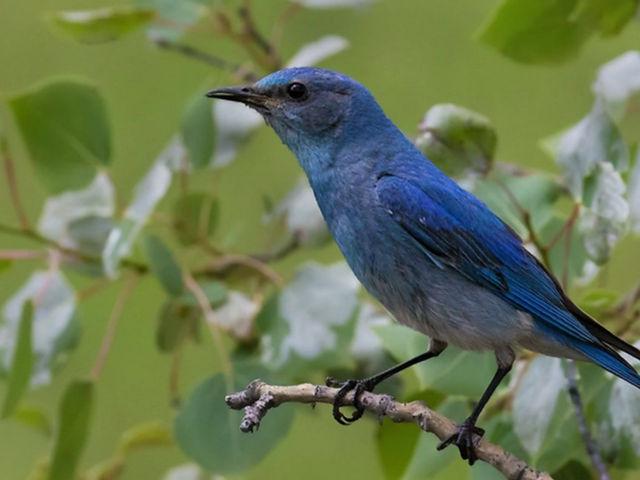 BC Birds- David Hemmings Photo Tours May 2020