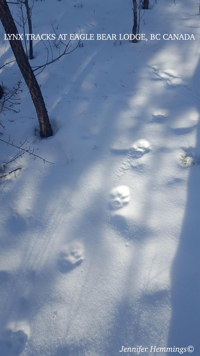 Lynx Tracks at Eagle Bear Lodge