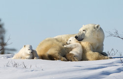 Polar 2016 24