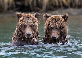 VP 1 24 x 36 2 Bear Cubs.jpg