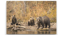 Oct. Still open!Great bear viewing Eagle Bear Lodge