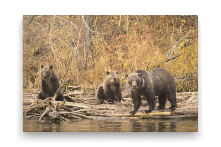 Eagle Bear Lodge - Bear VIewing
