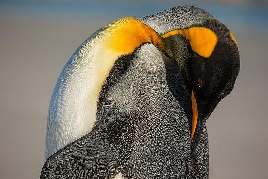 Falkland Islands Trip Report