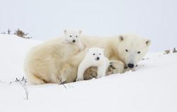 Polar 2016 20