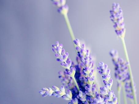 Lavender: 3 essential elements