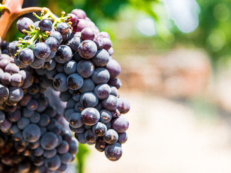 Red wine: should you drink it?