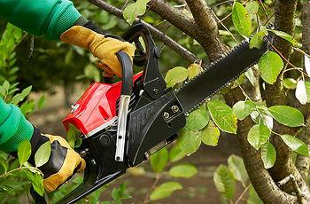 Tree Trimming & Handling