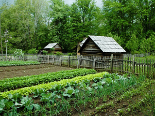 Helping Nature through Organic Gardening
