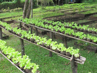 Organic Vegetable Garden Basics