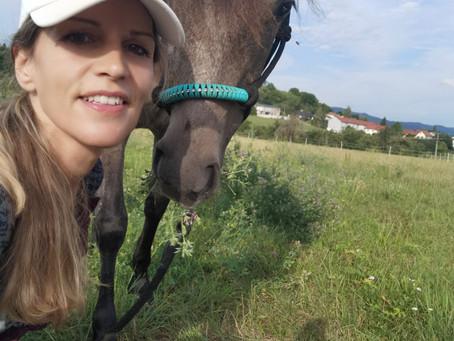 Warum ich Tiere (hier Pferde) LIEBE?