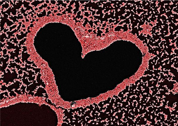 Bismuth heart.jpg
