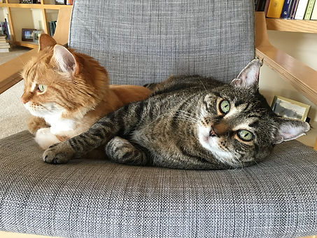 dr-b-s-2-cats-in-a-chair_orig.jpg