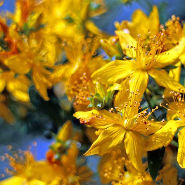 flower-374511_1280.jpg