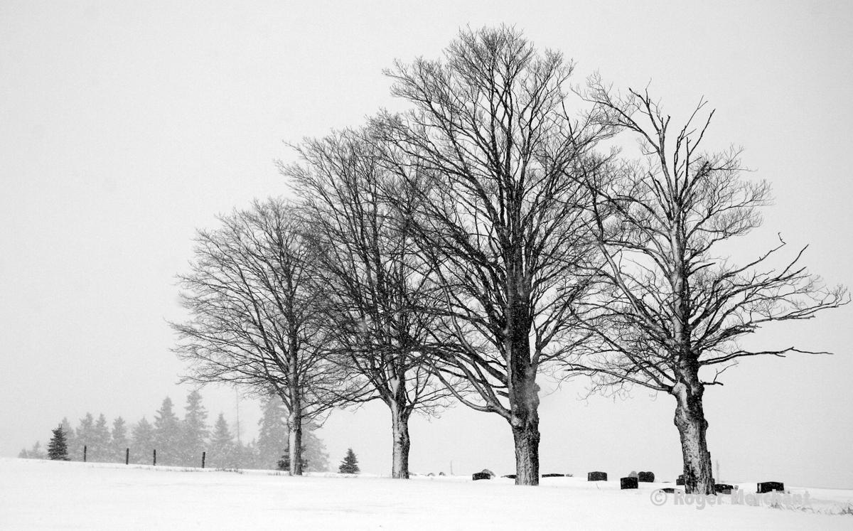 Aroostook Cemetery
