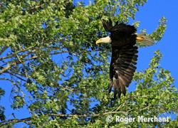 Eagle Tree Flight