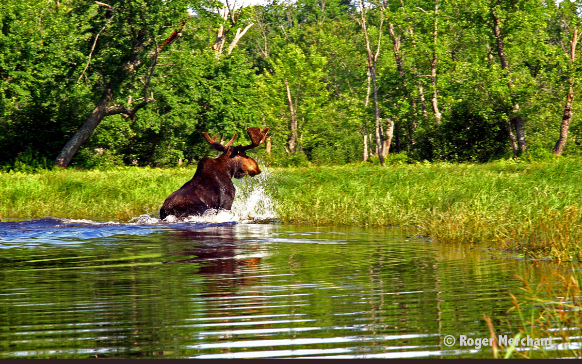 Bull Moose Hole