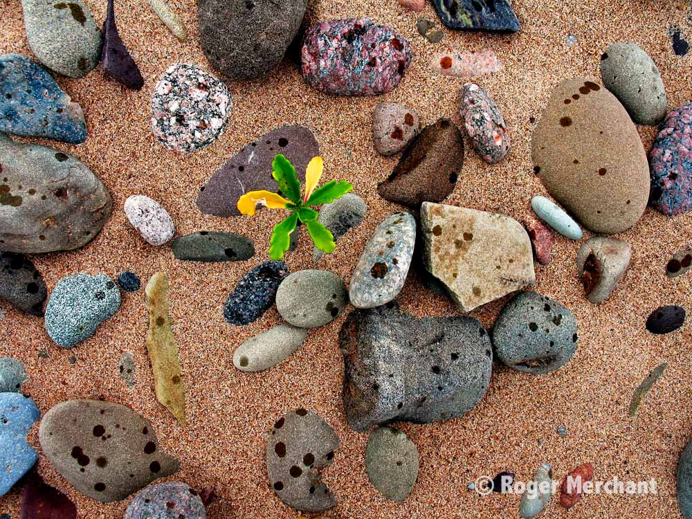 Beach Stone Raindrops