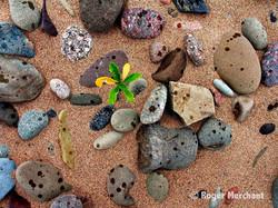 Beach Stone Raindrops